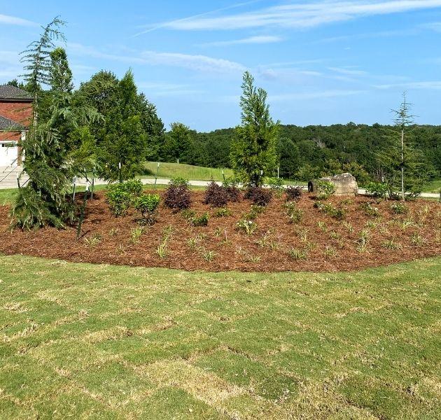 Lawn Renovation Service
